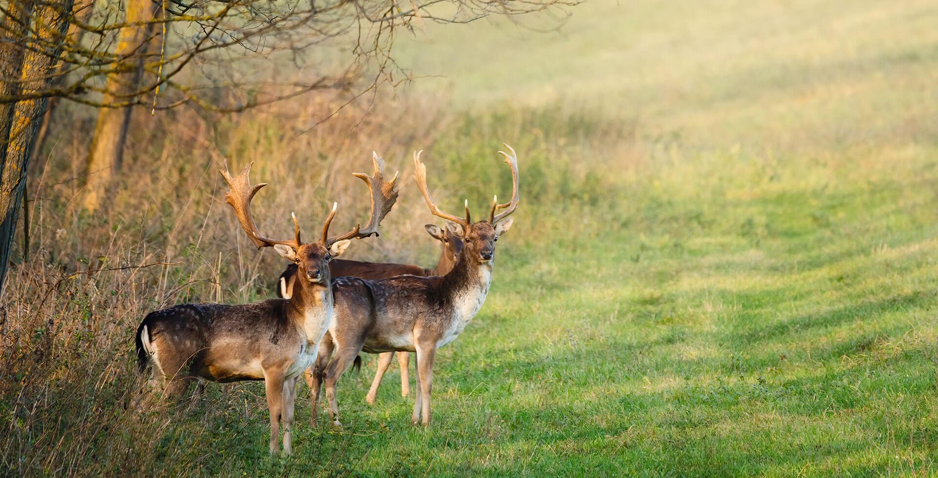 Jagt og vildt
